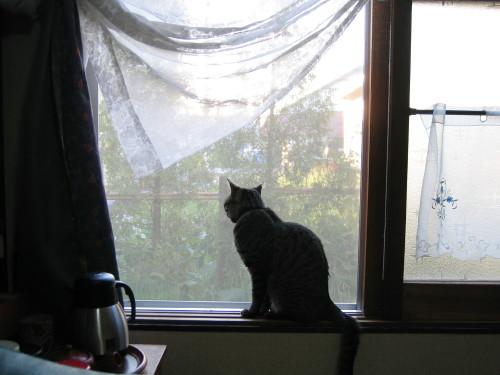 窓際でカカはなに想う
