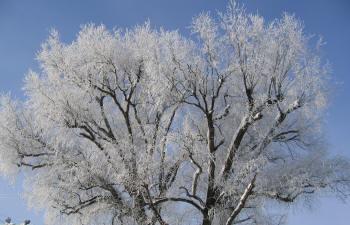 so-net用樹氷ー2 IMG0001.jpg